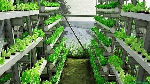 Peluang usaha pertanian dan perkebunan