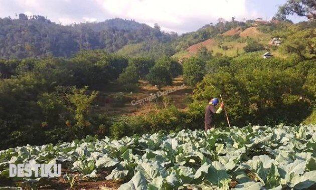 usaha pertanian yang menguntungkan