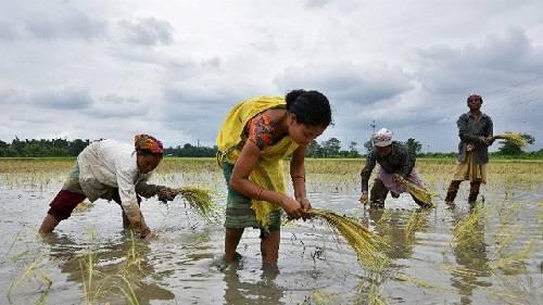 Usaha Kecil Bidang Pertanian