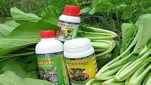 Usaha Pertanian Sayur