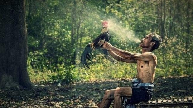 generasi katuranggan ayam aduan